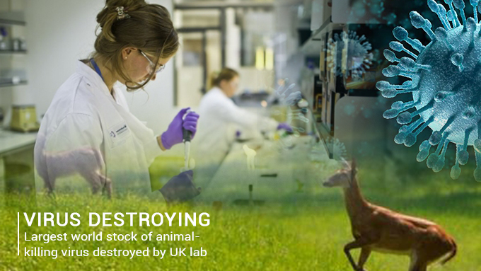 Lab of United Kingdom destroyed the world Largest Stock of animal-killing Virus