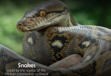 Snakes might be the cause of Coronavirus outbreak in Wuhan