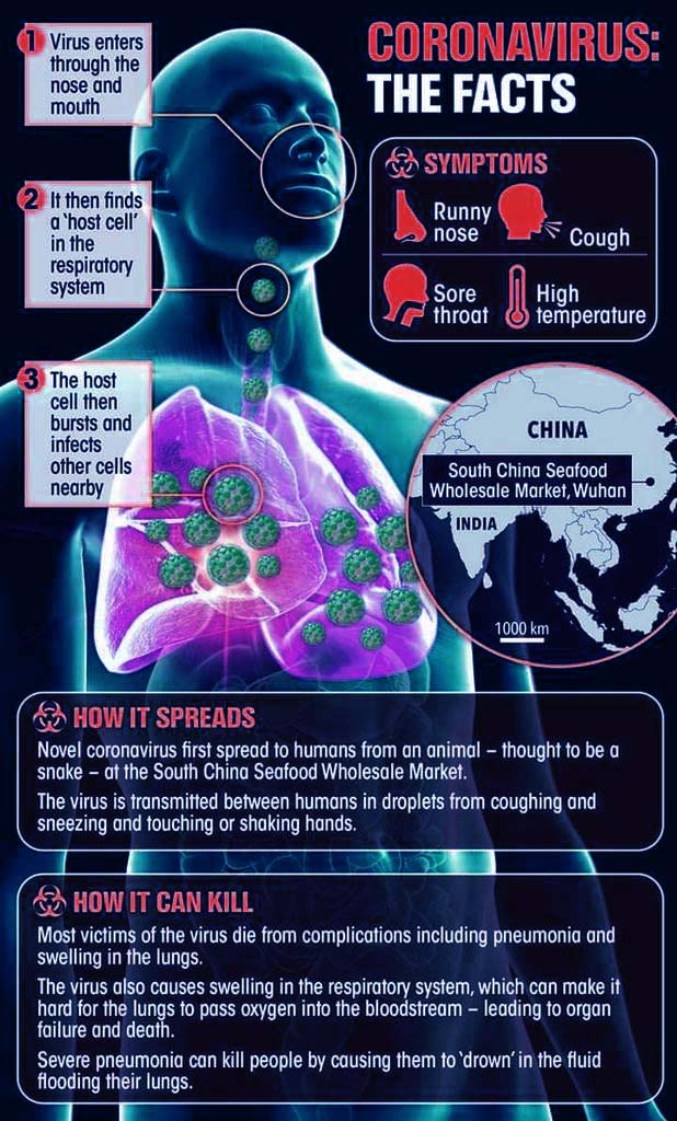 What is Coronavirus and how it affects Human